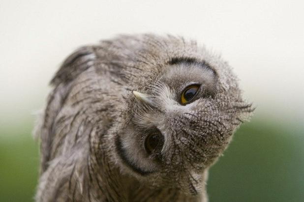 owl-twist